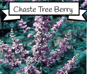 chaste tree berry for estrogen
