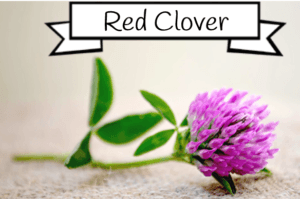red clover for estrogen
