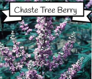 chaste tree berry for estrogen
